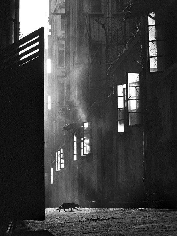 фан хо, хо фань, гонконгская фотография, гонконг 50-х 60-х годов, fan ho, уличная фотография, история фотографии, фотограф, фотоискусство,